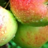 Äpfel und Zwetschgen